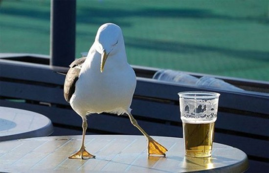Beer & Seagull