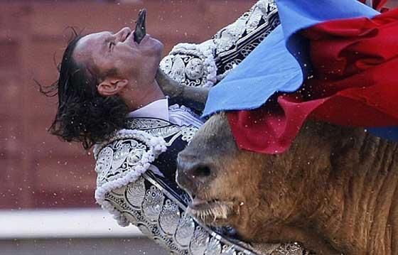Bull-Wins.jpg